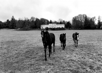 horses on the estate